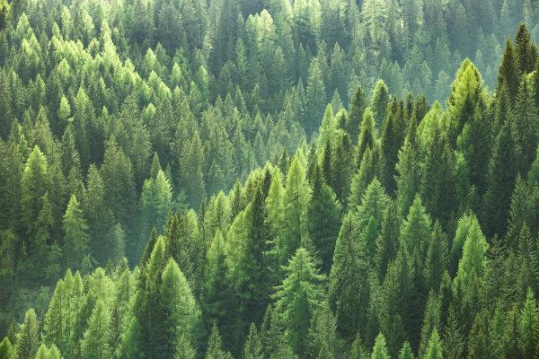 Forest Industries Innovation Fund Loan Scheme