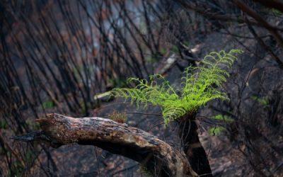 Australian Government Regional Bushfire Recovery Measures