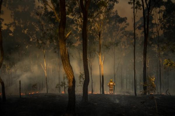 Eurobodalla Bushfire Recovery Support Service